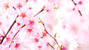 flowery-background